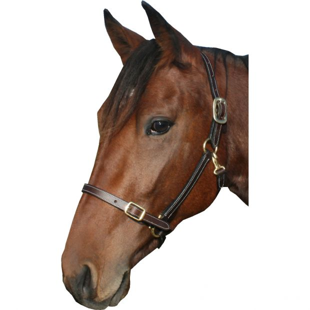 "GP-Tack Leather halter 3/4"" with buckle on nose and throat snap"