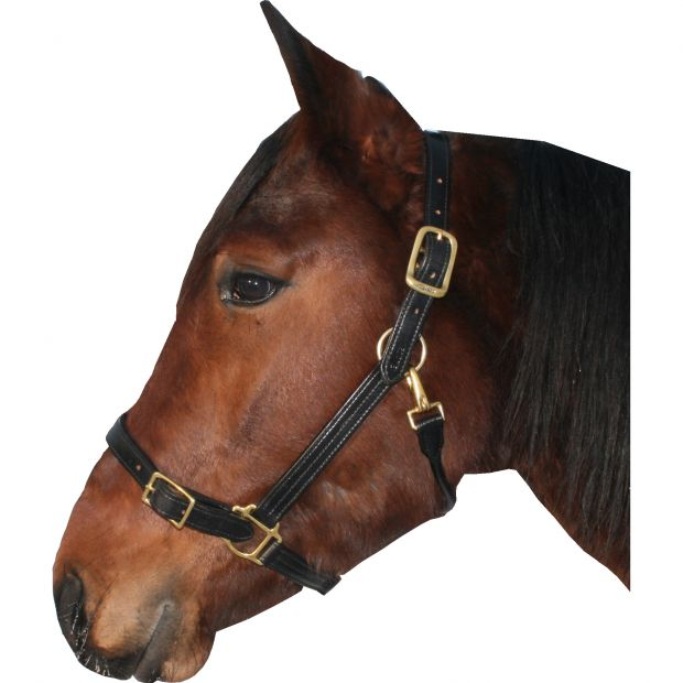 Walsh Leather halter 25 mm with buckle on the nose