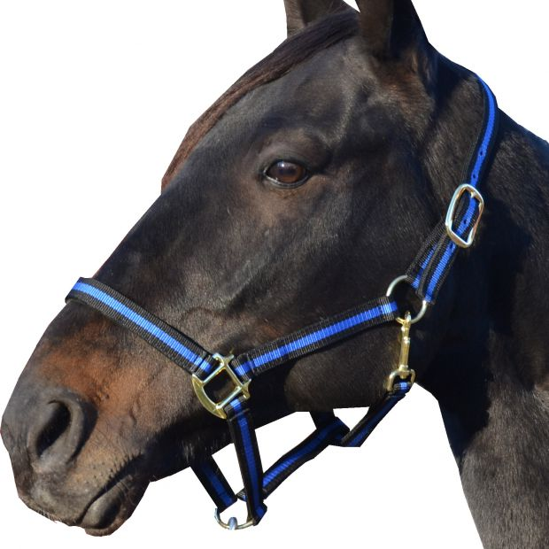 """Equitare Retro Nylon halter 1"""" without buckle on the nose"""