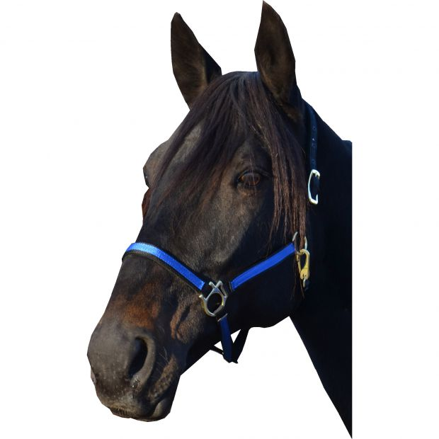 """Equitare Nylon halter 3/4"""" 2-coloured without buckle on nose"""