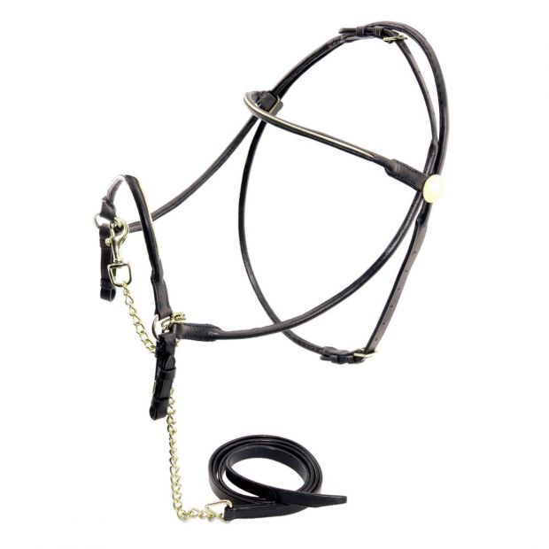 Show bridle with chain lead